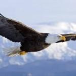Life After TBI: Fly Like an Eagle
