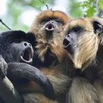 "Calming Those ""Chattering Monkeys"" In Our Head"